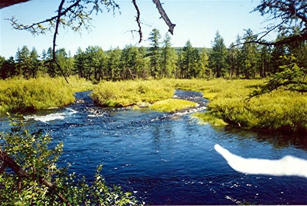 Fluss in der taiga im sommer !